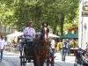лошади на улицах Брюгге