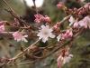 Пришла весна